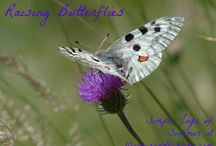 *Gardening with the Bees & Butterflies* / Pictures of bees and butterflies in the garden
