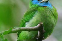Pretty Birdies / by Missy McGinnis