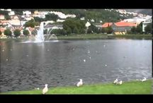 Video from Bergen city, Norway
