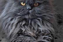 kočky-velké i malé