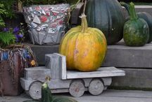 Pumpkins. / It´s fun to rise pumpkins.