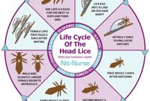 The Facts of Lice / Learn the truth about lice before it's too late!