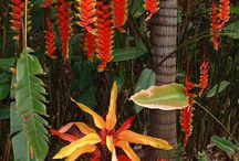 Hawaiian Plants and Flowers / Hawaii's fertile volcanic earth and the subtropical climate are the perfect condition for wonderful plants | www.hawaiianrecovery.com | #addiction #recovery #drugrehab #alcoholabuse #hawaii