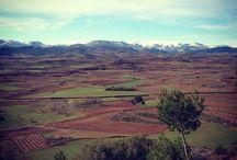 Viñedos, bodegas, paisajes