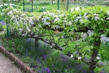 Kitchen Garden - Keittiökasvitarha / Happy Gardener