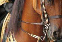 Unique Horse Tack