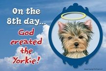 It's a Yorkie Thing / by Karen