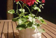 my Little flowers