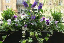 Jardinières printemps
