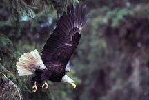 United States / Cool animals and places found in the good ol' US of A