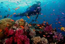Fave diving locations