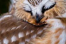 uil   owl
