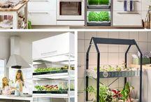 veggie garden/plants