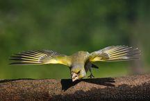 Birds by Sagi