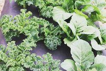 CT Grown Vegetables