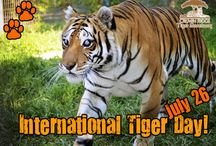 Crown Ridge Events / by Crown Ridge Tiger Sanctuary