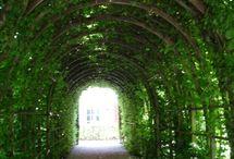 Garden / by Angela Norton