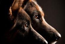 Dog-a-holic....!!!!!