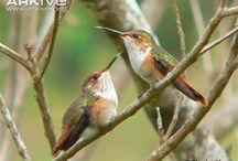birdies in your garden