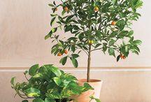 Indoor plants / by Sara Craven-Ruggles