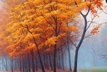 Autumn/Fall / by Laurie Ress