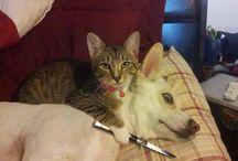 Наши друзья / Все о домашних животных