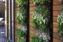 Vertical Gardening - Wall Gardens / A relatively new gardening trend to use vertical space for extra planting ideas