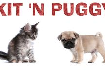 Kit N' Puggy / by The Pet Collective Tv