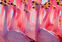 Flamingo #LOVE