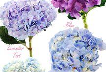 Gardening: Floral.