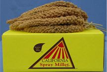 Products - California Spray Millet