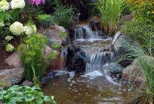 Water Gardens & Ponds