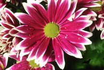 Flowers / Snaps of beautiful flowers