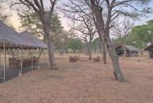 &BEYOND CHOBE UNDER CANVAS / En pleno corazón de África, experimenta el 'glamping' en lodges y tiendas móviles que permiten al viajero seguir de cerca a los '5 grandes' de la sabana. Botswana