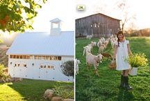 Farms / by Katy Nelligan