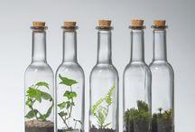 Bottled forest