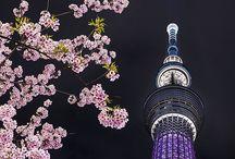 scene JAPAN