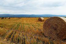 hay bale / round hay bale