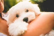 Cuccioli di cane / Teneri e dolci cuccioli di cane di tutte le razze, scopri quanto sono adorabili e giocherelloni!