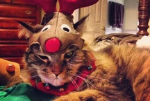 """Cats =^..^= Christmas / There is a legend, that is 100-200 years old,which says that unless you get at least one new garment to wear for Christmas you """"get caught by the Christmas Cat"""" or """"dress the Christmas Cat"""" as the saying goes. The Christmas Cat was supposed to be some kind of a monster that originally came from the other nordic countries. The ginormous cat's sole purpose in life is to eat children (and adults, some say) that do not get a new piece of clothing before Christmas.   / by Joan Halbig"""
