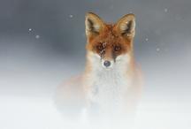 Wildlife Photography / Wild