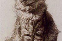 Cirmos cicák