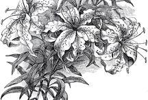 черно-белый рисунок