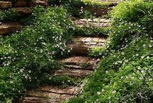 Dream Garden / by juliet appiah-nyanta