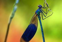 papillons, libellules, insectes...