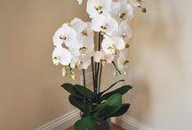 • Floral Arrangements • Indoor / Stunning floral arrangement designs for sale from Floral by Design