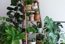 Green Living with plants