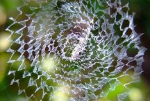 Spider Webs / creating spider webs. / by Betty Davidson