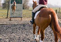 Horse & Rider Training, Fitness, & Tips