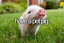 Cute animale ❤️